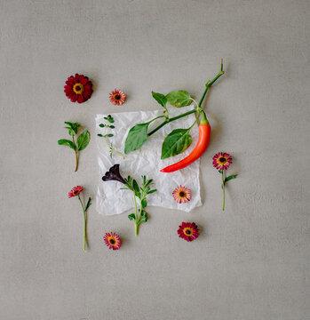 Blumen, Kräuter und Chili als Kochzutaten Flatlay