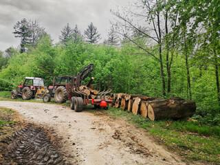Fototapeta wycinka drzew obraz