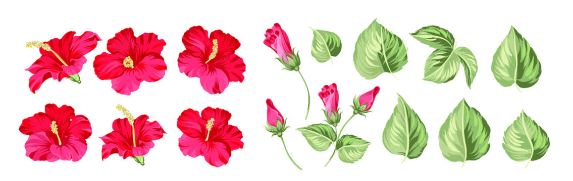 Set of differents hibiscus on white background.