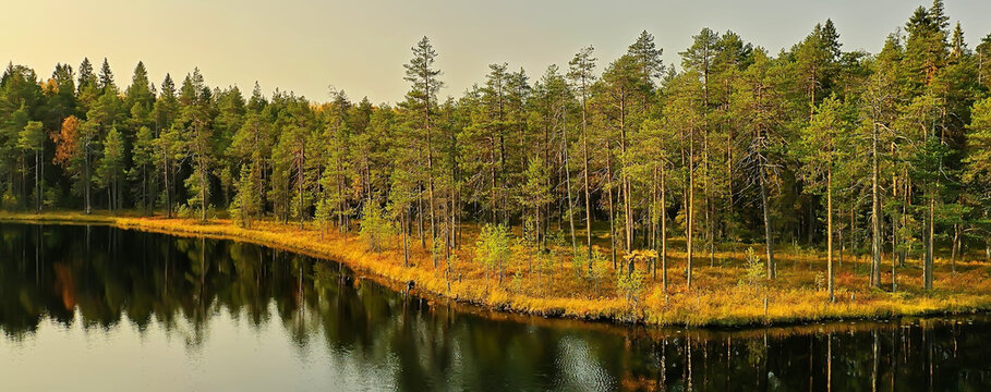 river autumn view from drone forest, landscape panorama aerial view