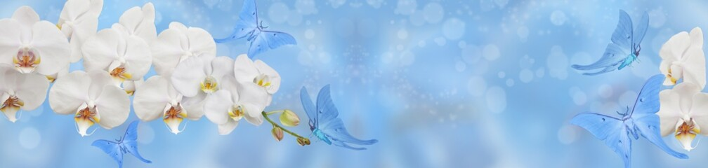 blue butterfly and white orchid