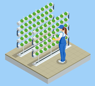 Isometric vegetable hydroponic system, modern greenhouse smart plant beds, gardeners, hydroponic and aeroponic systems. Organic agriculture in the greenhouse for health food