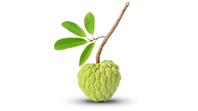 Green custard apple and leaves on a white background.