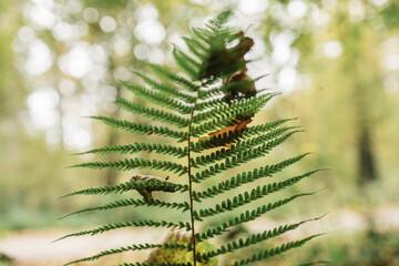 Fototapeta Jesienne spacery po lesie obraz