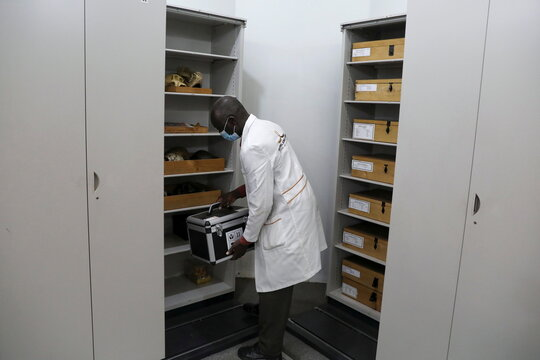 An employee holds a box containing remains of a child buried around 78,000 years ago in Panga ya Saidi cave near Kenya's coast, at the National Museum of Kenya, in Nairobi