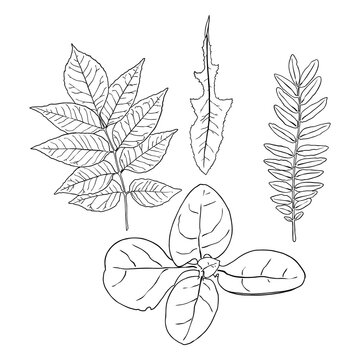 Floral design elements. Leaves with branches. Set of domestic greenery grass, home plant branches. Vector.