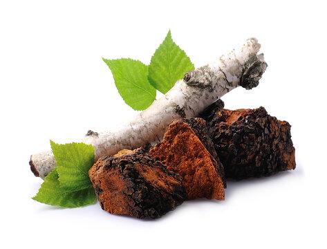 Chaga mushroom pieces with birch leaves