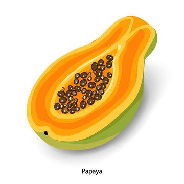Sliced papaya cartoon vector illustration. Organic food, sweet dessert, ripe tropical fruit. Half papaya with seeds, exotic salad ingredient isolated on white background
