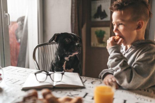 Man And Dog Looking At Camera