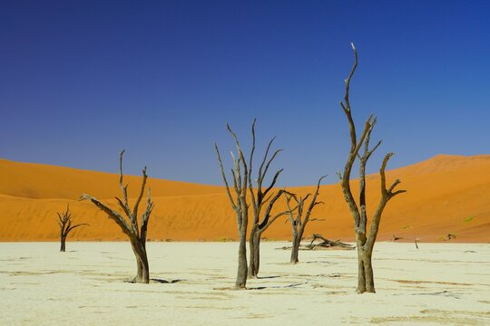 Dead Trees at Deadvlei in Namib-Naukluft National Park, Namibia