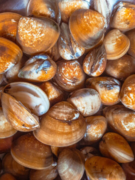Top view of piled vongole clams displayed in a wet market