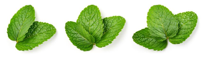 Fototapeta Mint leaf isolated. Fresh mint on white background. Set of mint leaves. Top view. Full depth of field. obraz