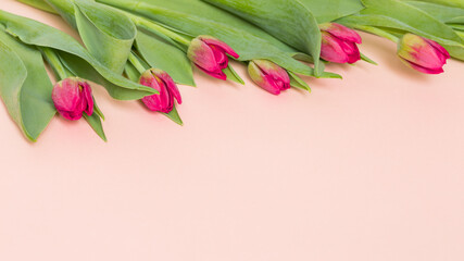 Obraz Różowe, kwitnące tulipany na pastelowo różowym tle - fototapety do salonu