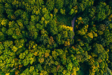 Aerial view of autumn colorful tree tops and pines. - fototapety na wymiar