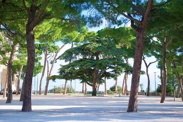 Fototapeta Drzewa we Włoszech