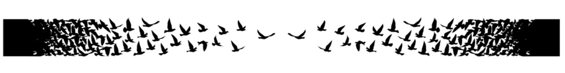Fototapeta Flying birds silhouettes on white background. Vector illustration. isolated bird flying. tattoo design. obraz