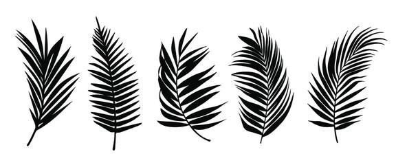 Obraz Beautiful palm tree leaf set silhouette background vector illustration  - fototapety do salonu