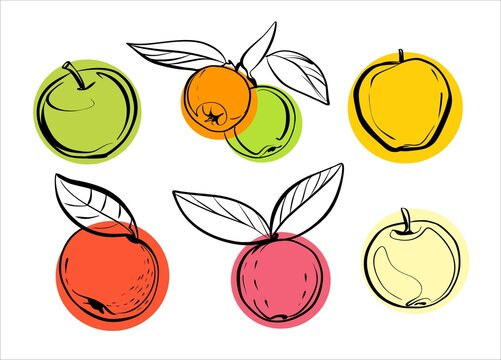 A set of different varieties of apples with and without leaves. Illustration, sketch in a linear style with colored circles.
