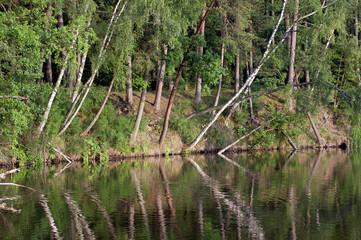 Pochylone nad wodą drzewa z ich odbiciami w spokojnej tafli wody