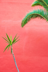 Obraz Plants on pink fashion wallpaper. Palm and wall. Minimal tropical design. Travel holiday relax nature concept. Canary Islands - fototapety do salonu