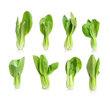 Collection of bok choy  vegetable (chinese cabbage) isolated on white background
