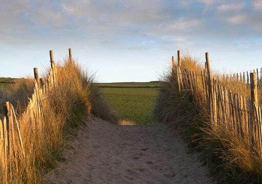 Sand dunes at Bantham Beach, Devon, England