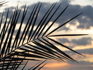 Obraz Folha de palmeira ao por do sol / nascer do sol - fototapety do salonu