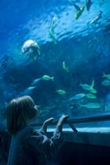 Fototapeta a girl looks at a large aquarium with fish in the aquarium