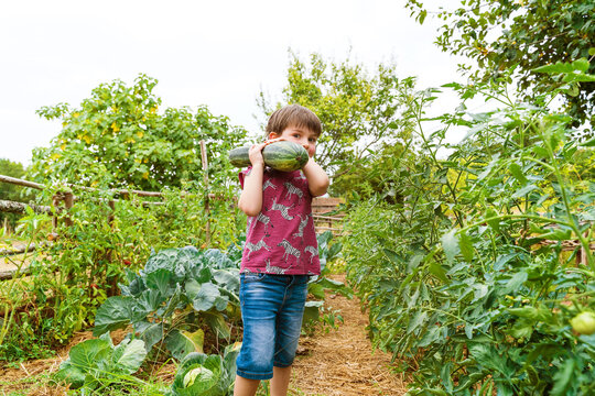 Sincere child with big zucchini looking at camera while standing between growing vegetables in countryside on summer day