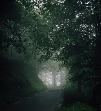 Scenic view of high trees with thin trunks and green branches growing in forest on foggy day