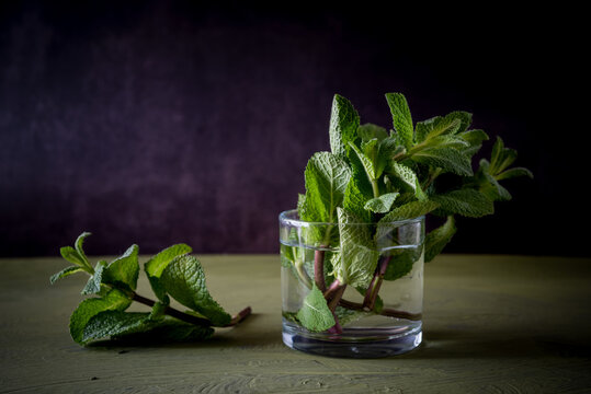 Green mint sprigs with aromatic leaves in transparent glass with pure aqua on dark background