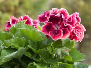 Obraz Wiosenne kolorowe kwiaty w ogrodzie i na łące - fototapety do salonu