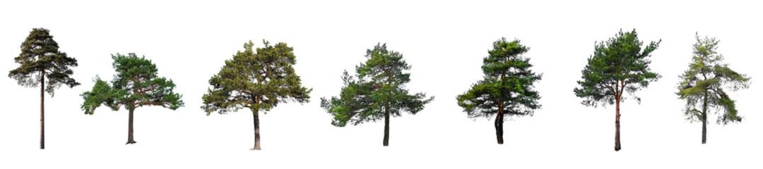 Fototapeta set of trees isolated on a white background obraz