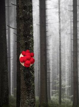Schwarzwälder Bollenhut im Nebelwald