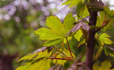 zielony liść rozświetlony słońcem