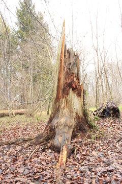 Unser kranker deutscher Wald, eine Katastrophe für Mensch und Tier - Waldsterben