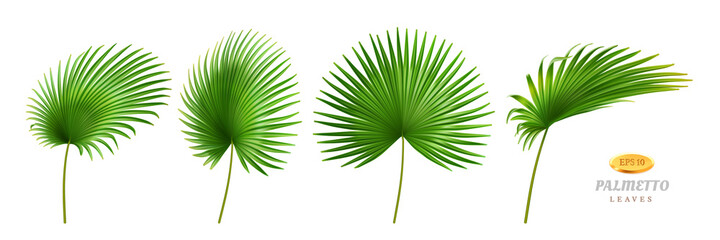 Tropical leaves, isolated palmetto plant decorative foliage in different positions and shapes. Exotic decoration, jungle or rainforest decor. Hawaiian theme and forests. Realistic 3d cartoon vector Wall mural