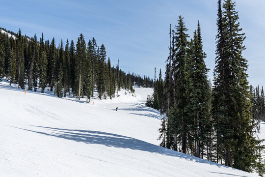 ski resort trail covered in snow and tall green trees revelstoke british columbia