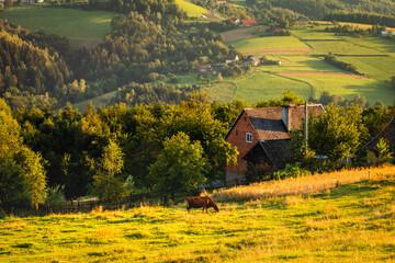 Obraz A warm summer sunset in the Rożnowskie Foothills, near Nowy Sącz. Poland, Lesser Poland Voivodeship. - fototapety do salonu