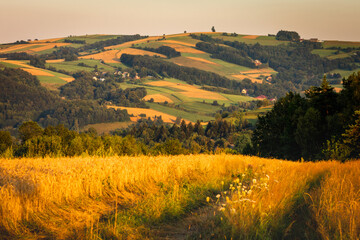 Fototapeta A warm summer sunset in the Rożnowskie Foothills, near Nowy Sącz. Poland, Lesser Poland Voivodeship. obraz