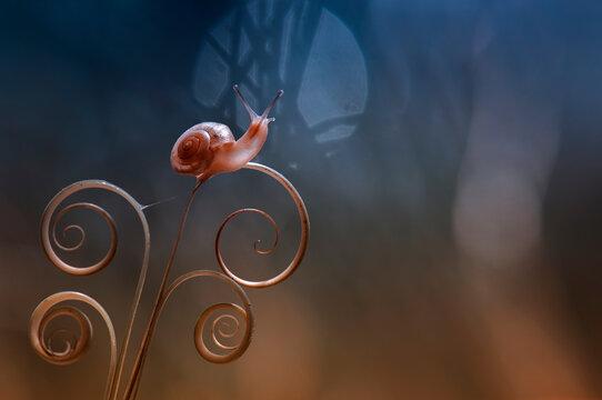 Snail On The Stalk