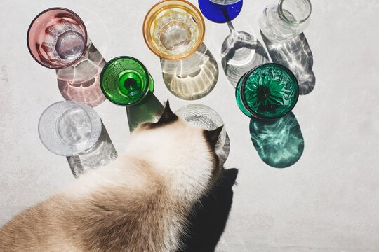 High Angle View Of Cat Drinking Glass