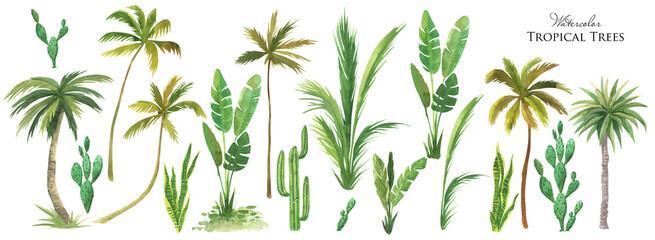 Fototapeta Watercolor tropical tree set. Green palm leaves, cactus plants, Succulents bush obraz