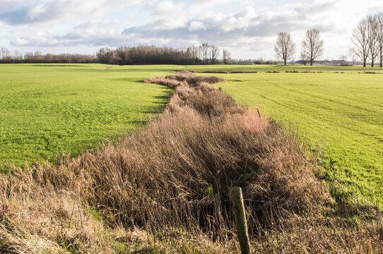landscape with ditch in meadows in polder near river IJssel in winter