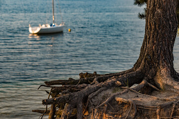 Fototapeta Drzewo Korzeń jezioro łódka obraz