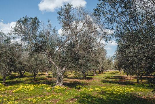 Countryside land in Puglia