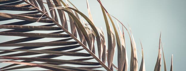 Retro palm tree summer background