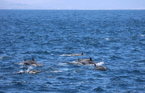 group of dolphins playing