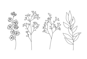Fototapeta Flowers and leaves branches hand drawn sketch black and white line art illustration