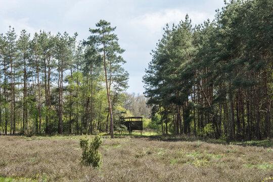 bird hike in nature area in the forests of Winterswijk in the Achterhoek in spring